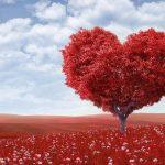 como atraer el amor con la ley de atracción