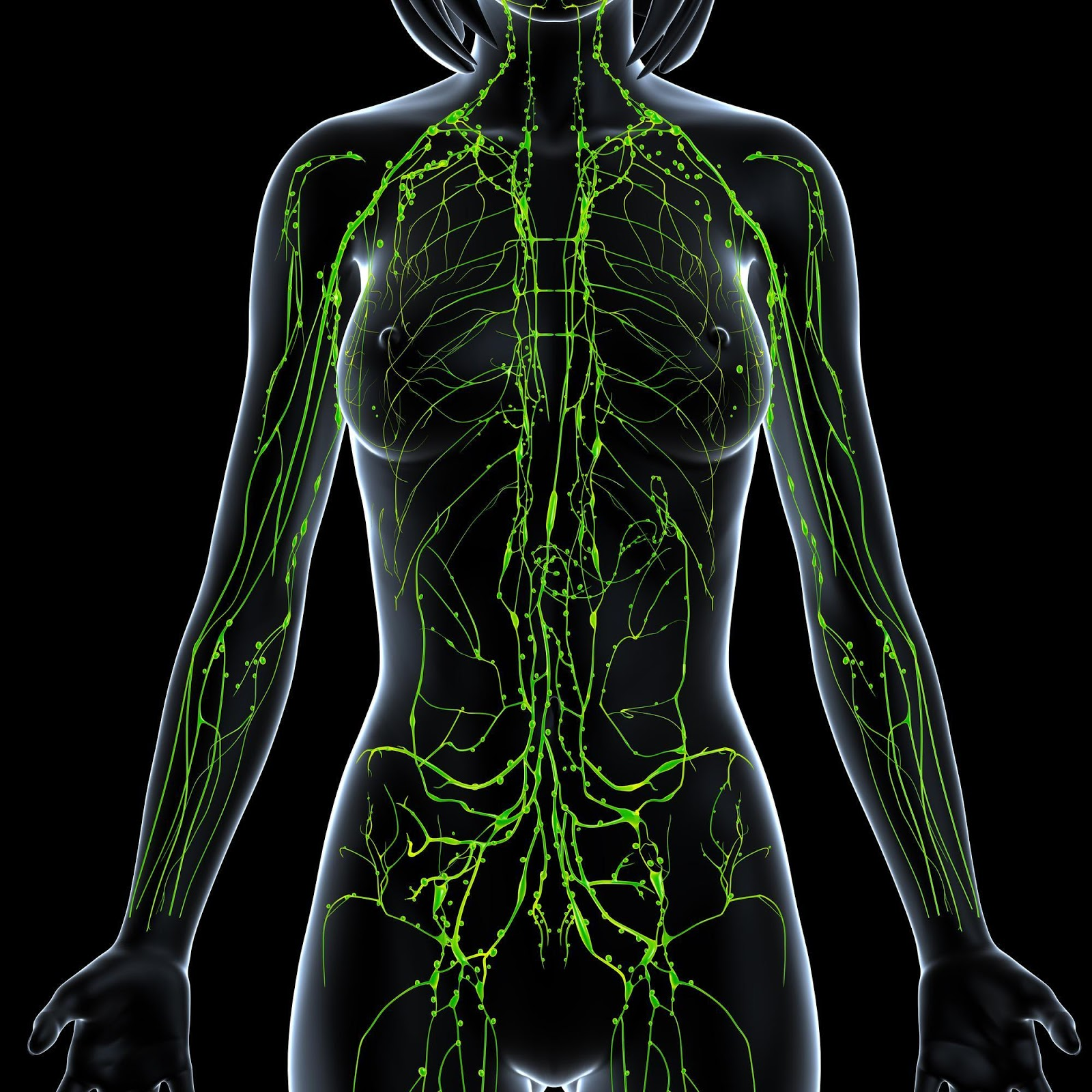 Lymphatic System In Woman's Body